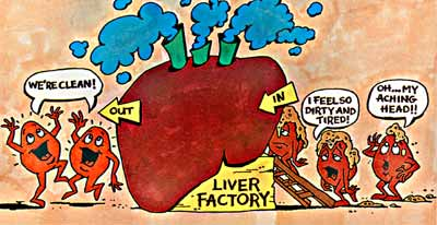 LOVE YOUR LIVER AND LIVE LONGER